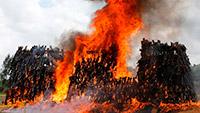 В Кении сожгли пять тысяч единиц нелегального оружия