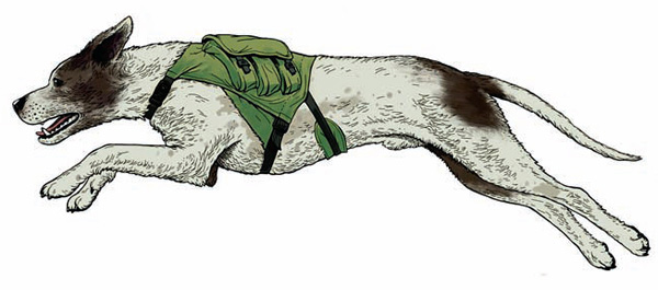 Собака  патрульнопостовой службы может быть и оруженосцем для своего  напарника. Здесь на шлейке собаки выполнен патронташ с патронами к  гладкоствольному боевому ружью