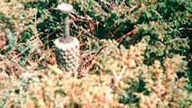 Противопехотная мина PMR-2A (ПМР-2A) / PMR-2AS (ПМР-2AС)