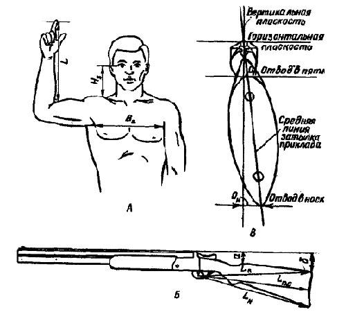 А - основные размеры стрелка: L - длина руки от изгиба в локтевом суставе до середины первой фаланги (ногтевого сустава) указательного пальца (Измерение производят в той одежде, в которой будут охотиться); Hз -высота зрачка над ключицей; Вг - ширина груди между подмышками. Б - Основные размеры ложи: Lп - длина ложи от переднего спускового крючка до пятки приклада; Lпс - то же, до середины затылка; Lн - то же, до носка приклада; а - отгиб (погиб) ложи книзу в передней части гребня приклада; о - отгиб (погиб) ложи книзу в пятке приклада (размеры а и о зависят от длины шеи стрелка), В - измерение отвода ложи в сторону: Оп - отвод ложи в пятке; Он - отвод ложи в носке (Размеры Оп и Он зависят от ширины груди и лица стрелка)